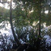 Træer med en sø i baggrunden