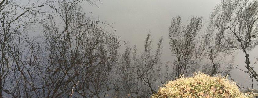 træer og tåge